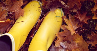autumn still life with yellow rubber boots