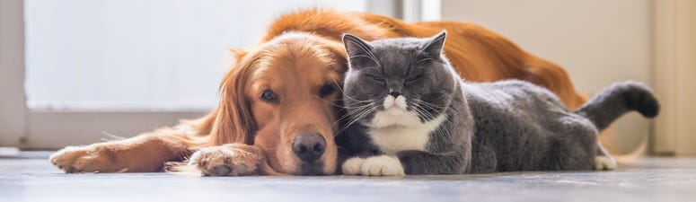 Dog & Cat Are Friends