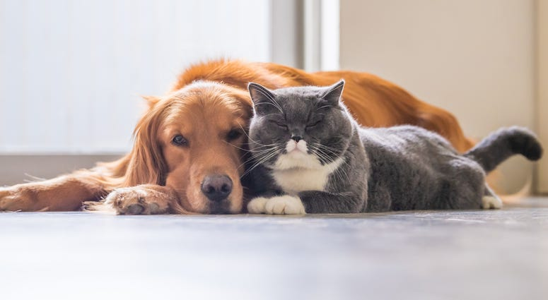 Dog & Cat Are Friends