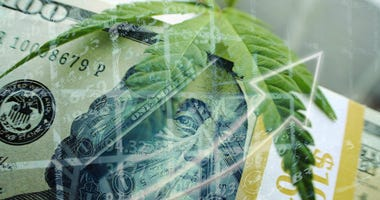 Marijuana Profits Soaring High
