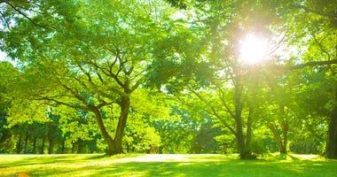 Summer, Summer Sun