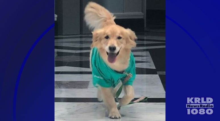 Cook Children's Hospital Therapy Dog Journey