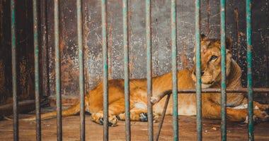 Animal Trafficking