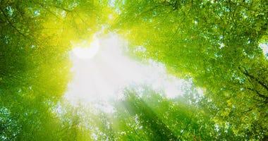 Sunshine, Trees
