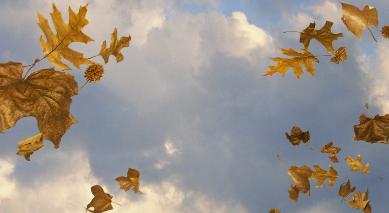 Windy sky with leaves blowing