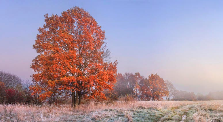 Frost In a Pasture