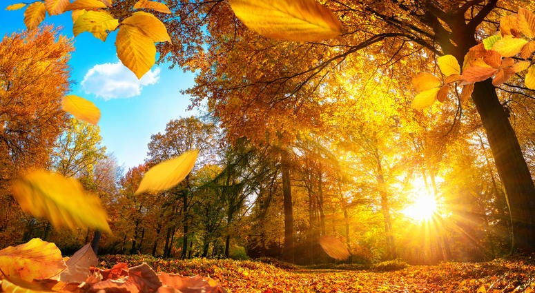 Fall Weather, Sunshine