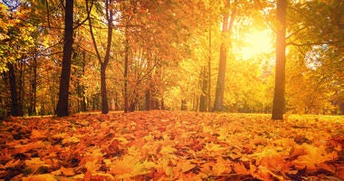 Autumn park. Autumn forest sunrise