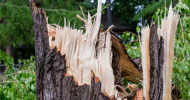 Storm Damage, Broken Tree