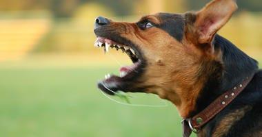Vicious Dog