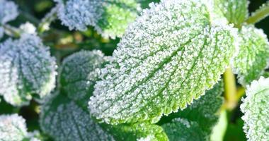 Freezing Weather, Plants