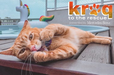 KROQ to the Rescue Cat
