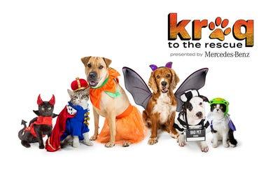 KROQ to the Rescue Pet Costume