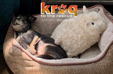 KROQ to the Rescue Lazy Dog
