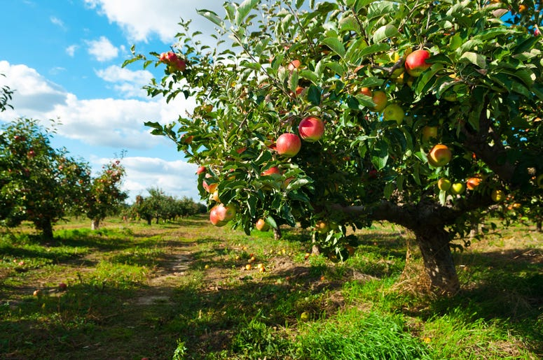 7 Best Places To Go Apple Picking Near La The World Famous Kroq