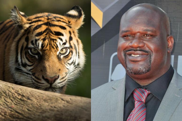 Shaq Tiger King