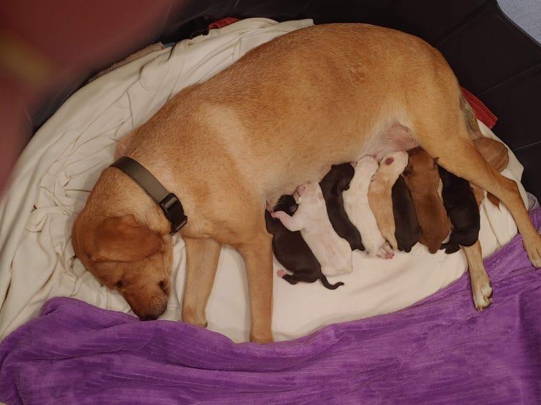 Cleo & Pups