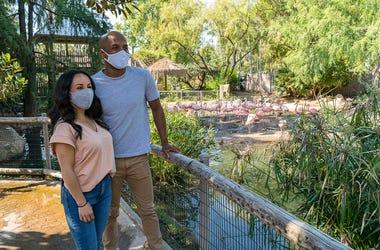 san diego zoo safari park masks