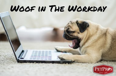 Woof In The Workday