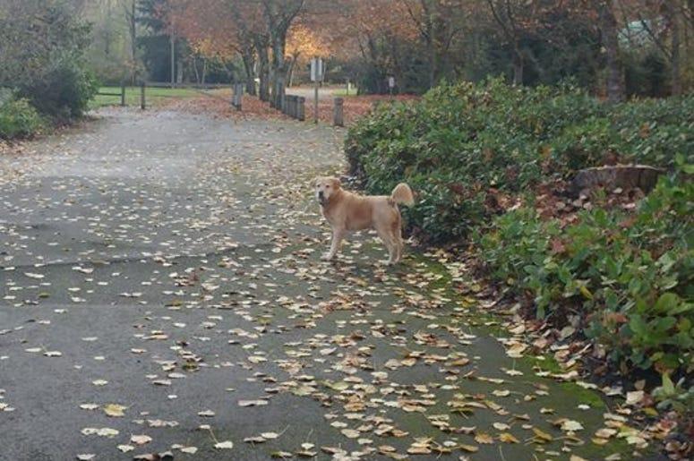 Teddy at Newcastle Beach Park