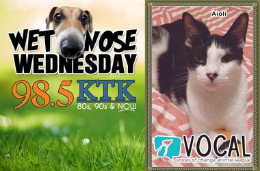 Wet Nose Wednesday-2.12.20 Aioli