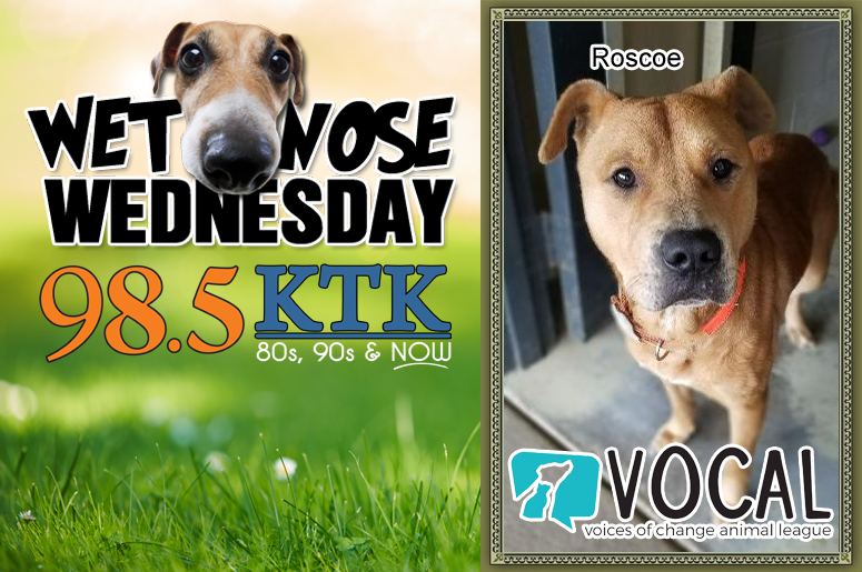 Wet Nose Wednesday Roscoe