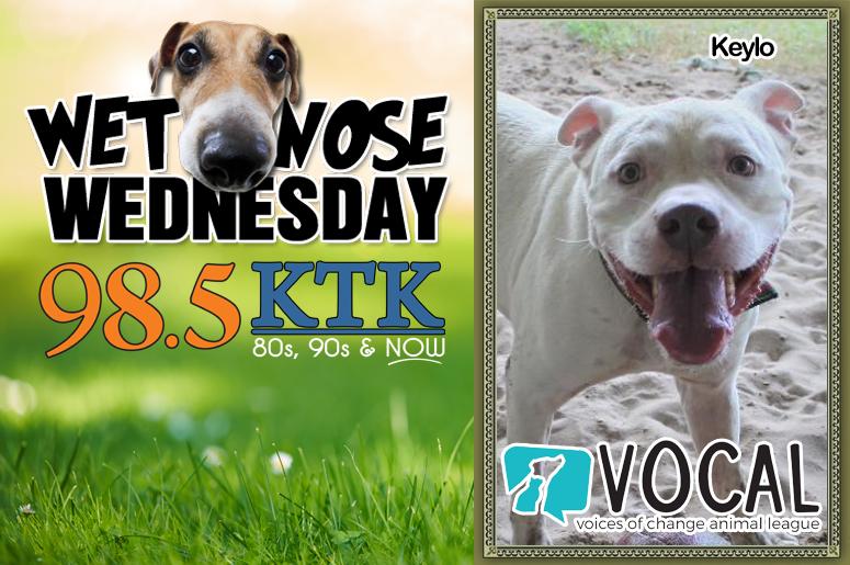 Wet Nose Wednesday 11.27.19