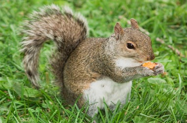 Cheetos_Squirrel