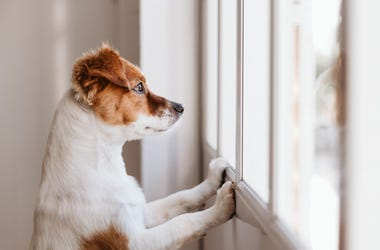 Dog_At_Window