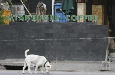 Dog_Starbucks