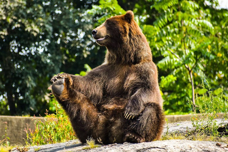 Bear, Sitting Up, Rocks, Forest, Cute, Funny, Grizzly Bear, Stretch