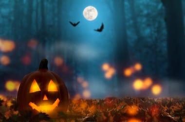 Halloween, Night, Outdoors, Jack-O-Lantern, Forest, Spooky