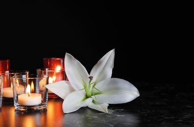 Japanese Peace Lilly