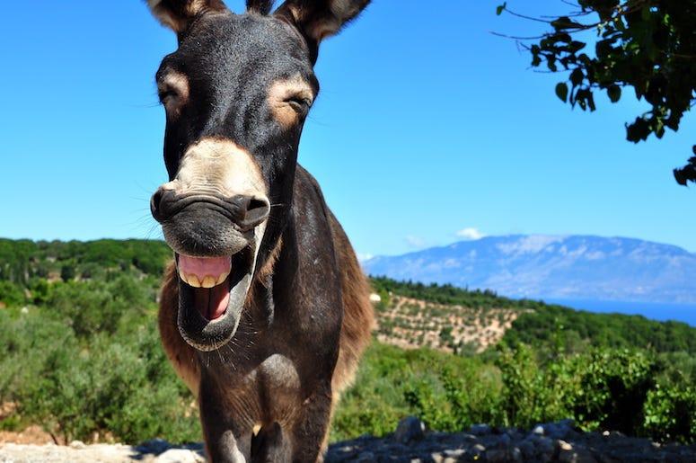 Donkey, Laughing, Blue Sky, Greek Island