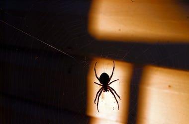 spiderder