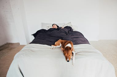 Woman, Sleeping, Bed, Dog, Eyes Closed