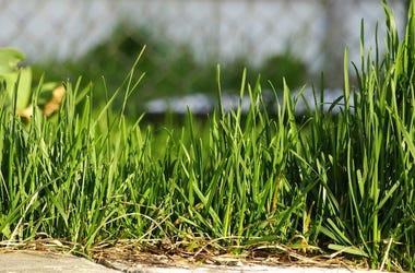Lawn, Grass, Yard