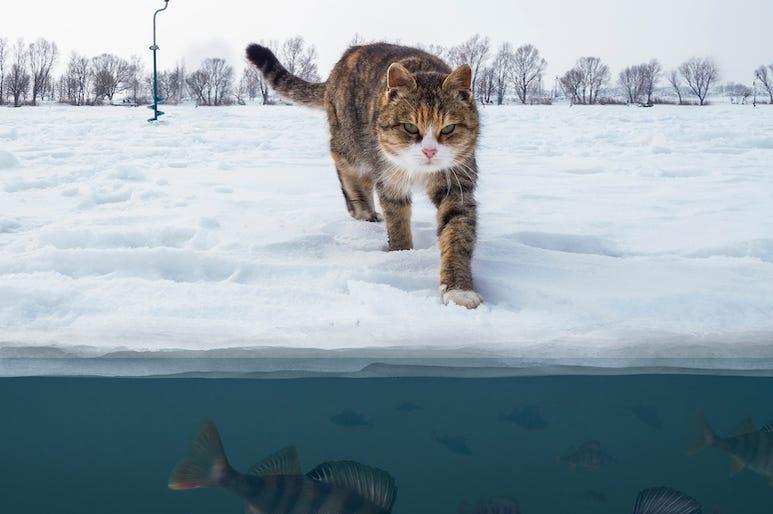 Cat, Frozen Lake, Snow, Ice, Fish