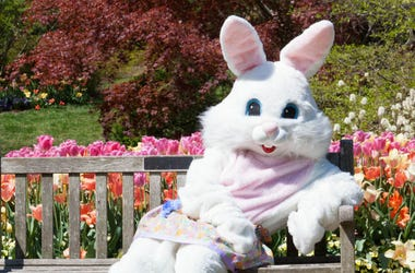 Easter Bunny,Scarry,Video,Elementary School,Kids,Terrified,Funny,Costume,Surprise,ALT 103.7