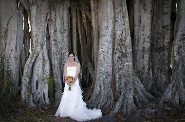 Wedding, Bride, Tree