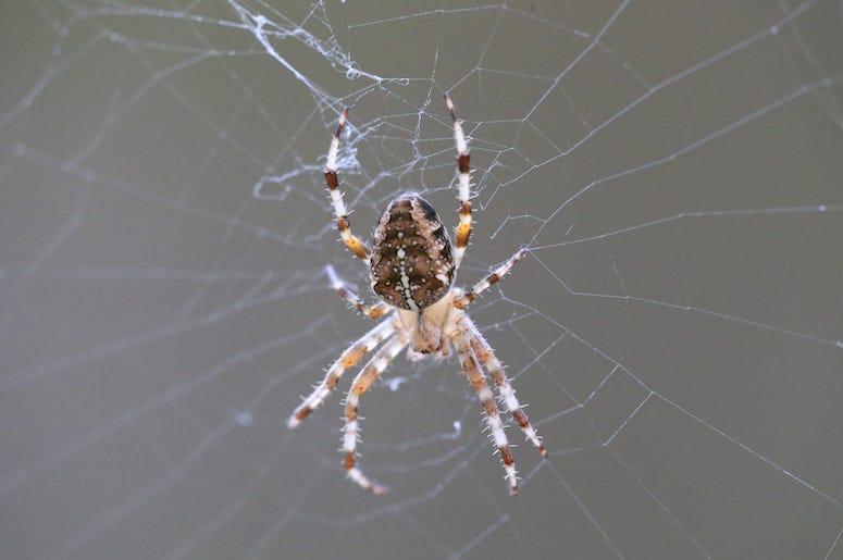 garden spider, good spider, bad spider, spider, texas, dfw, awful, terrifying