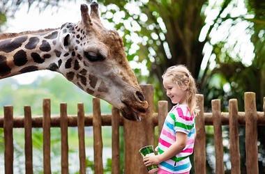Little Girl & Giraffe