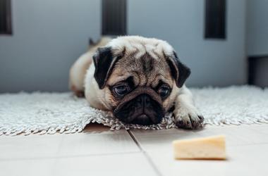dog_cheese