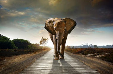 Elephant, Walking, Street, Road, Sunset