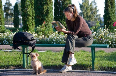 College, Student, Reading, Bench, Park, Dog