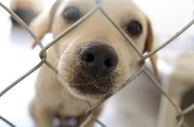 Shelter Dog, Snoot, Nose, Cute, Dog