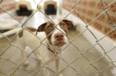 Shelter Dog, Cage, Adoption, Snoot