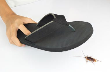 shoe and roach