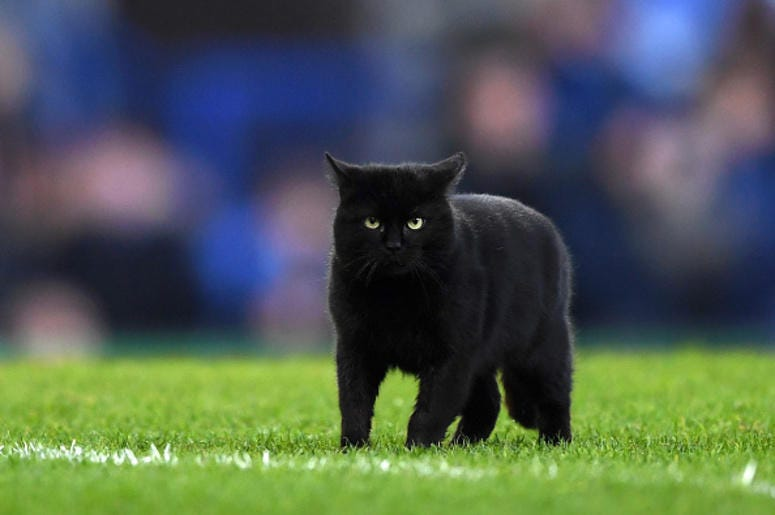 Dallas Cowboys Game Stopped As Black Cat Runs On The Field