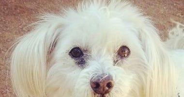 Hi, I'm Coco!